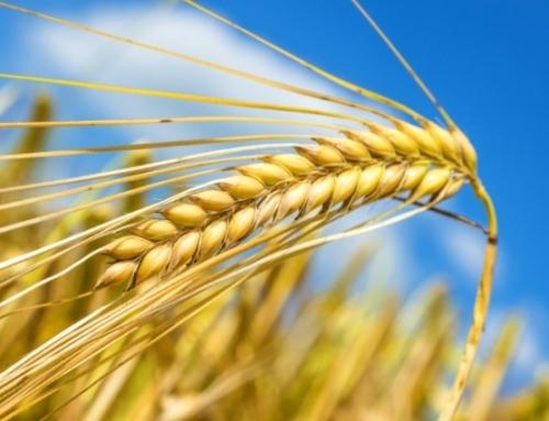 Startvonalon az új agrár pályázatok és a vidékfejlesztési program