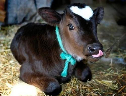 Kiemelt cél az állattartás ösztönzése, de rendkívül fontos a kertészeti ágazat fejlesztése is