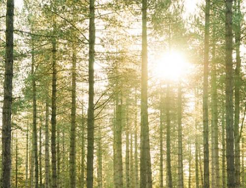 Erdősítés támogatása pályázat