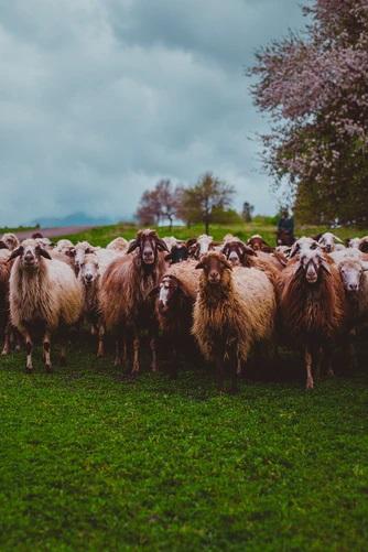 📣 Vírusválság: veszít vagy nyer a magyar agrárium? – beszámoló