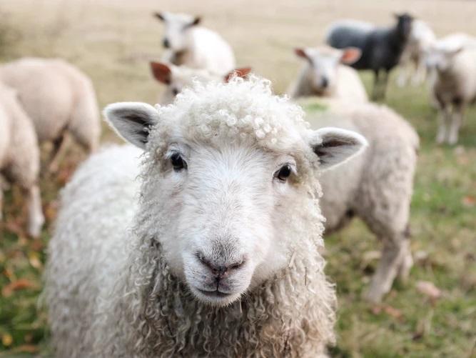 5+1 tény az állattartótelepek korszerűsítése pályázatról🐮